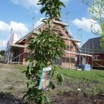 Unser erster Baby-Baum