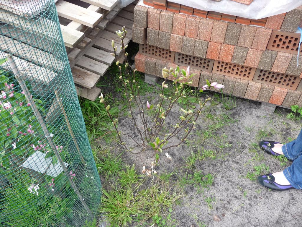 Pflanzen wachsen hier wohl sehr gut :-)